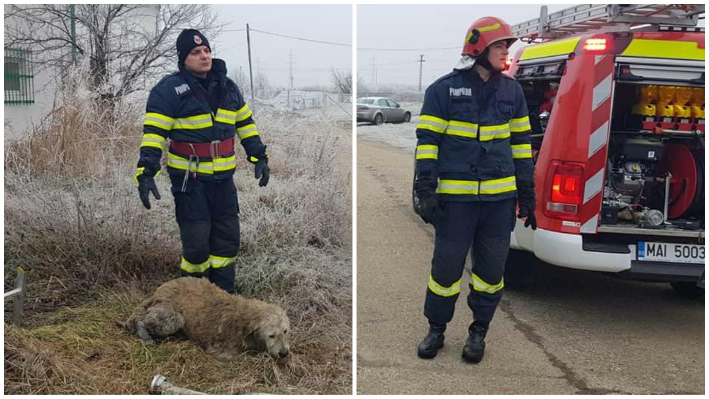Cuvinte de laudă pentru pompierii de la ISU Timiș! Aceștia au salvat vineri, viața unui cățel!