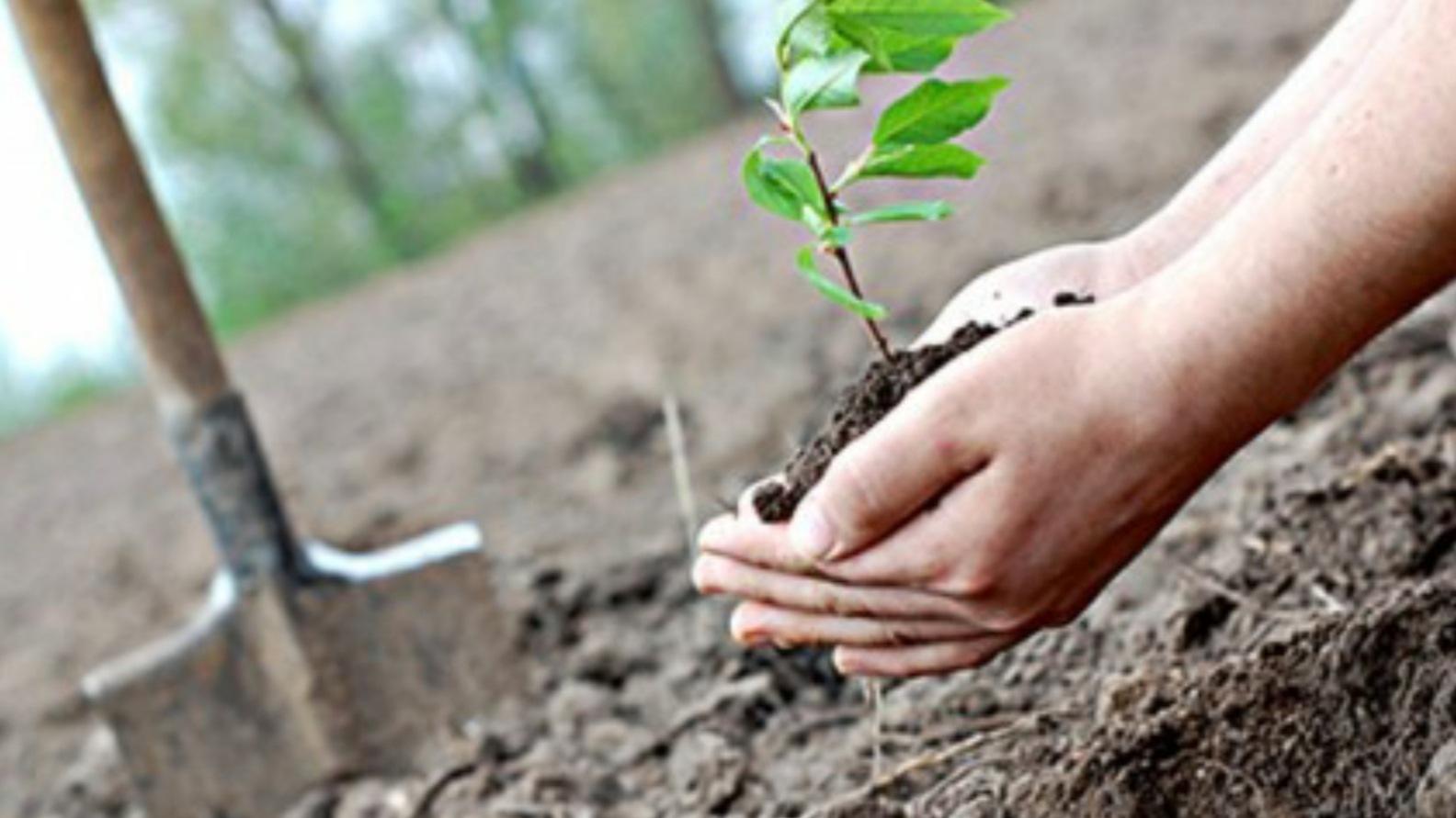 """""""Românii plantează o pădure cât o ţară"""" Ministerul Mediului începe o campanie de împădurire"""