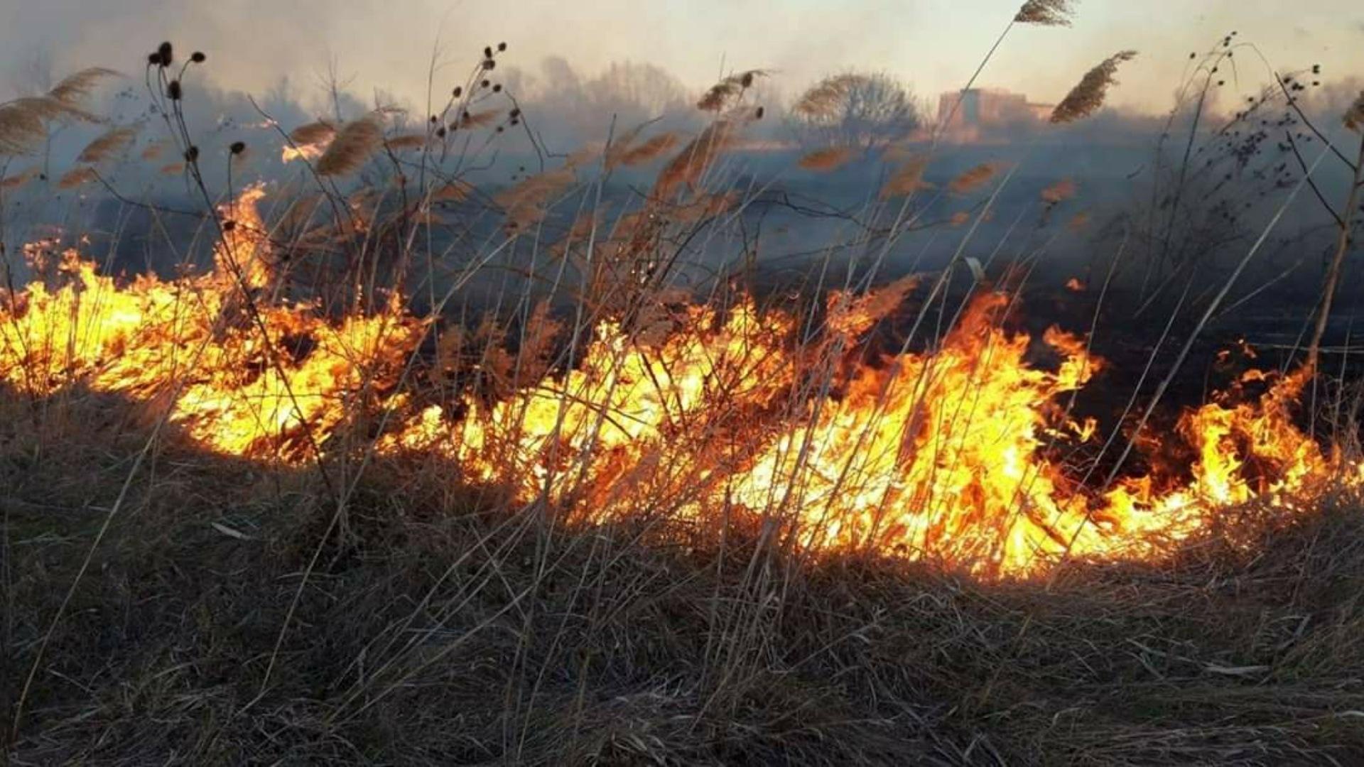 Video | ISU-BIF intervine cu 11 autospeciale pentru a anihala incendiul puternic din Delta Văcărești