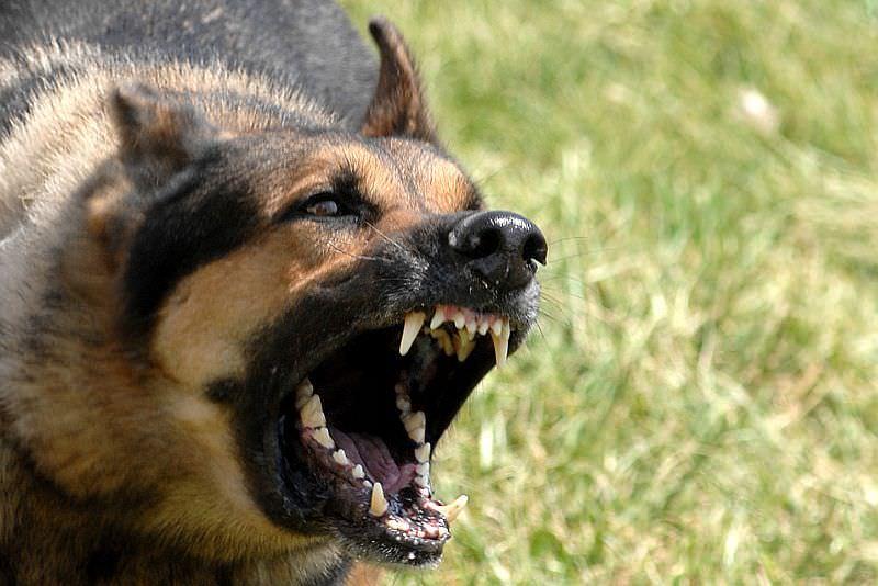 Bărbat din Olt, găsit mort și sfâșiat de propriul câine, în propria locuință!