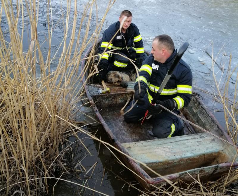 Orice suflet contează. Pompierii din Sibiu au salvat un cățel dintr-un lac înghețat!