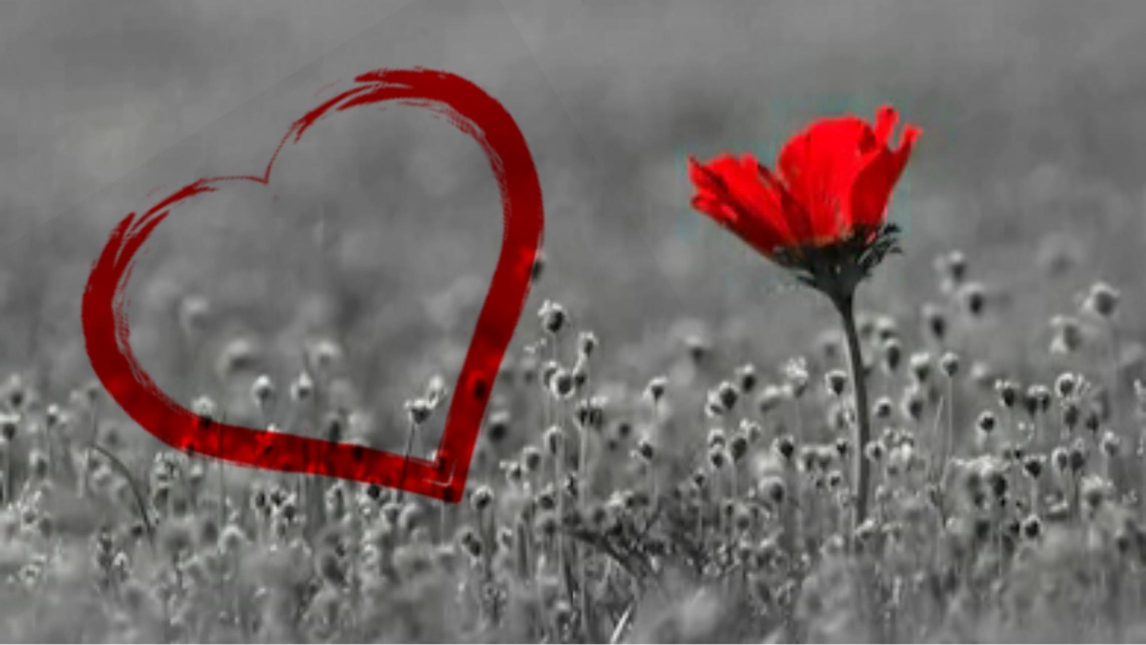 """""""Multe guri vorbesc despre iubire. Puține inimi iubesc cu adevărat"""""""