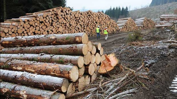 Peste 100 de dosare penale pentru tăierea ilegală de arbori, în urma controalelor efectuate de polițiști într-o săptămână