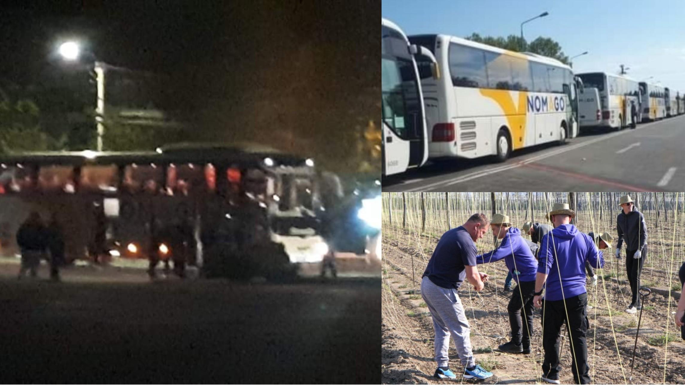 Sute de români au plecat în Slovenia pentru a munci pe câmp, 20 de autocare au plecat vineri noaptea